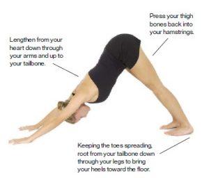 downward-facing-dog-standing-postures-in-hatha-yoga-f3